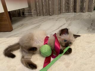 猫からのギフトの写真・画像素材[3973116]