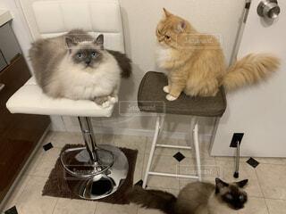 掃除機から避難する3匹の猫の写真・画像素材[3991946]