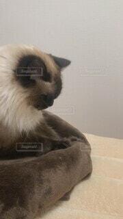 猫,動物,屋内,白,景色,ねこ,床,クッション,子猫,座る,毛布,甘える,ネコ科,動画,決定的瞬間,インスタ映え,お乳,足踏み