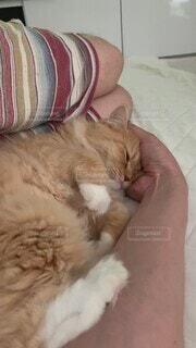 猫,動物,かわいい,ねこ,寝る,子猫,仔猫,オシャレ,可愛い,眠い,お洒落,おしゃれ,動画,甘え,決定的瞬間,インスタ映え,ラガマフィン