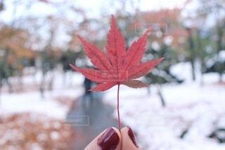 秋,紅葉,屋外,赤,手,葉,手持ち,人物,ポートレート,ライフスタイル,草木,手元,カエデ,フォトジェニック