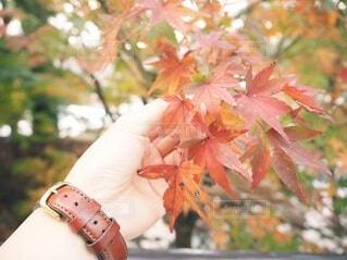 女性,秋,紅葉,手,葉,手持ち,人物,ポートレート,ライフスタイル,手元,カエデ,フォトジェニック