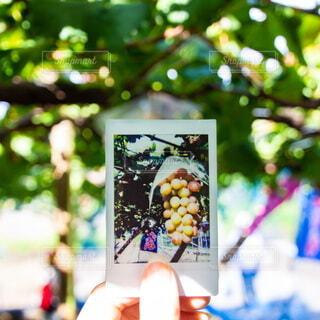 食べ物,手持ち,果物,樹木,人物,ブドウ,ポートレート,チェキ,ぶどう狩り,ライフスタイル,手元