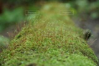 緑の畑のクローズアップの写真・画像素材[3692539]