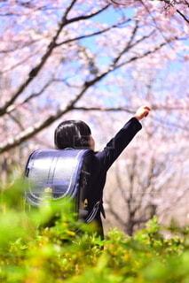 新一年生と桜の写真・画像素材[3683000]
