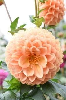 花のクローズアップの写真・画像素材[3691384]