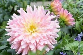 花のクローズアップの写真・画像素材[3691387]