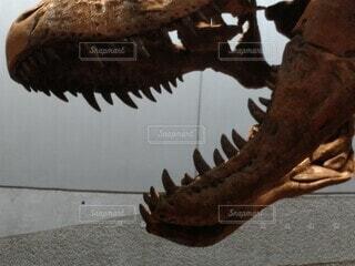ティラノサウルスΣ(゚∀´(ω・´ )ガブッの写真・画像素材[3681524]