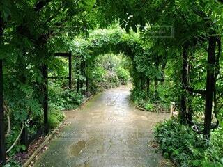 木々に囲まれた道の写真・画像素材[3681534]