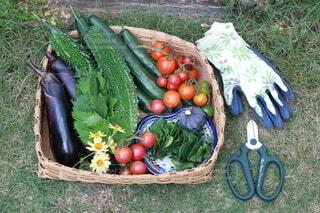 食べ物,トマト,野菜,食品,キュウリ,ゴーヤ,イチジク,大葉,プチトマト,食材,夏野菜,フレッシュ,ベジタブル,ナス,自然食品,とれたて野菜,オカワカメ