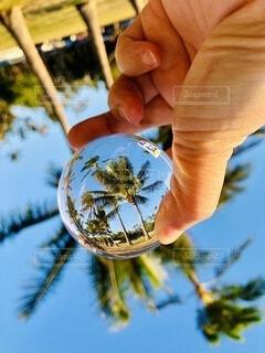 ハワイ/カイマナビーチパークのヤシの木の写真・画像素材[3688705]
