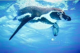 swimの写真・画像素材[3717316]