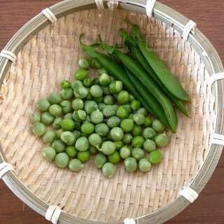 食べ物,緑,野菜,豆,食品,グリーン,収穫,食材,フレッシュ,ベジタブル,自家菜園,エンドウ豆