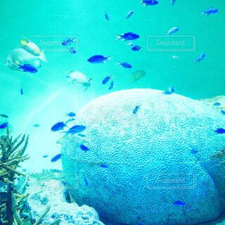 青い熱帯魚の写真・画像素材[4839303]