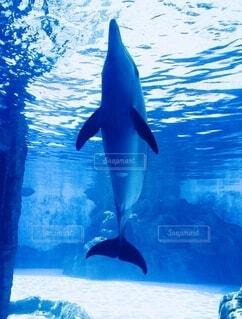 イルカの写真・画像素材[3685627]