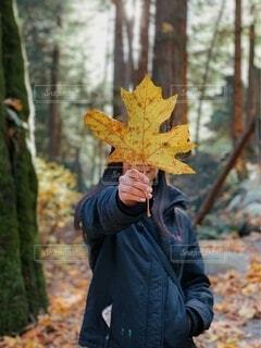 秋,森林,木,屋外,葉,季節,手持ち,樹木,人物,人,ポートレート,ハイキング,生命,発見,ライフスタイル,草木,手元,カエデ,散策