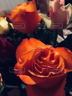 薔薇の花束の写真・画像素材[3750787]