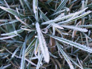 冬の霜の写真・画像素材[3750986]