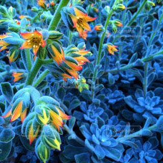 美しい多肉植物の写真・画像素材[3757060]