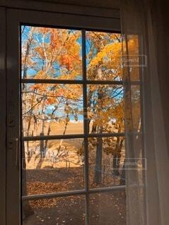 窓から見える紅葉の写真・画像素材[3757392]