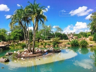 南国の美しい風景の写真・画像素材[3803062]