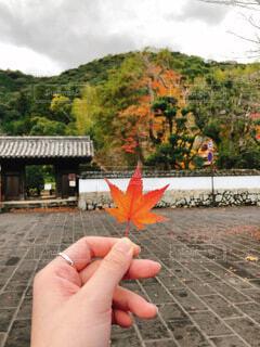 空,秋,紅葉,屋外,手,葉,手持ち,樹木,人物,人,地面,ポートレート,ライフスタイル,手元,カエデ