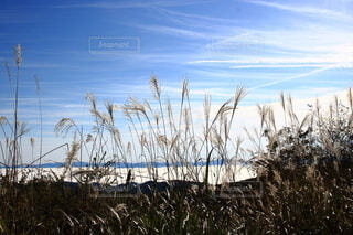 秋晴れの写真・画像素材[3792414]