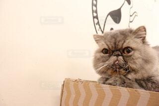 ブサカワ猫の写真・画像素材[3689778]