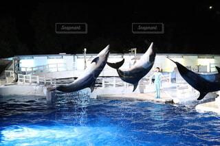 水から飛び降りるイルカの写真・画像素材[3689782]