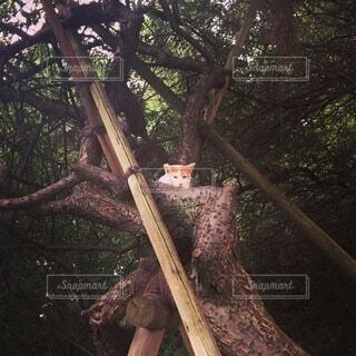 木登りの写真・画像素材[3688232]