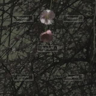 花の写真・画像素材[3688238]