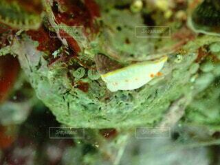ウミウシの写真・画像素材[3692188]