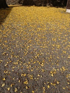 落ち葉の写真・画像素材[3712399]