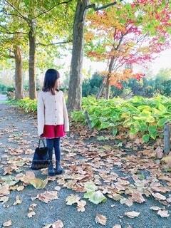 落ち葉の道の写真・画像素材[3696021]