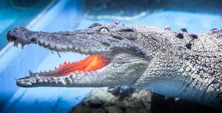 近くに爬虫類のアップの写真・画像素材[932397]