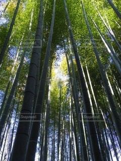 空,屋外,日差し,光,樹木,竹,竹林,陽射し,草木