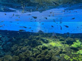 まるで本当の海にいるかのような水槽の写真・画像素材[3715745]