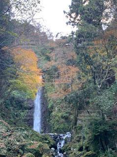 森の中の大きな滝の写真・画像素材[3726443]