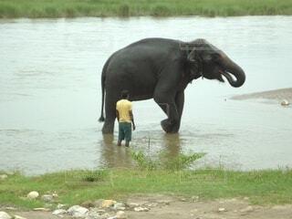 水遊びをさせてもらうゾウの写真・画像素材[3707481]