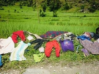 田んぼに干された洗濯物の写真・画像素材[3739398]
