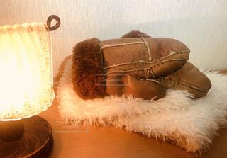 テーブルの上に置かれた手袋とランプの写真・画像素材[3979646]