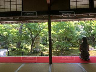 京都の圓光寺ですの写真・画像素材[3710267]