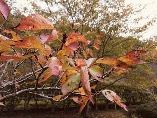 木の葉の写真・画像素材[3770111]