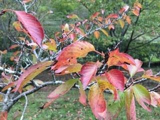 秋の木の葉の写真・画像素材[3770110]
