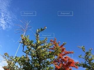 秋の実の写真・画像素材[3801890]