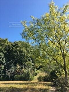 森の中の木の写真・画像素材[3813640]