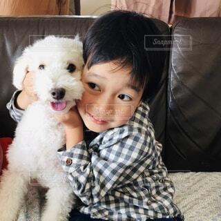 トイプードル白と男の子の写真・画像素材[4030791]