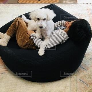 白い犬と男の子の写真・画像素材[4030839]