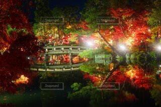夜の紅葉の写真・画像素材[3704832]