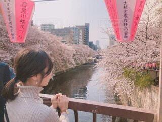 目黒川の桜の写真・画像素材[3706423]